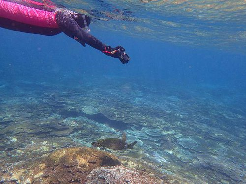 小さいウミガメと一緒に泳ぎ