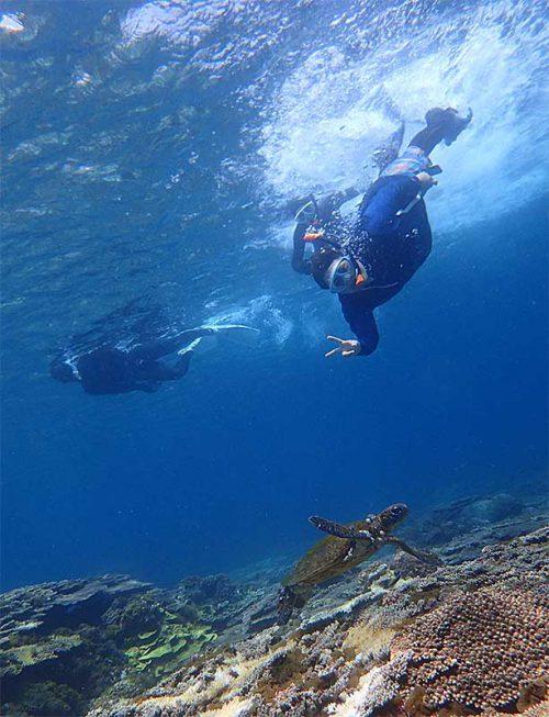 アオウミガメを一緒に泳いでみたり