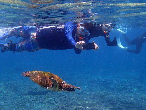 シュノーケリングでアオウミガメを間近で撮れたり