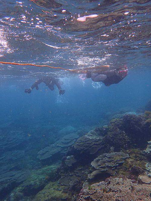 魚も見つつ沖まで泳いでいきまして
