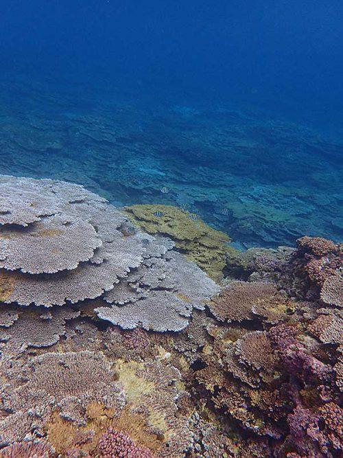 サンゴのところも魚が増える感じもあって