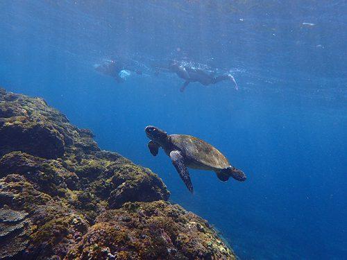 今日も一緒にウミガメ達と泳いで周り