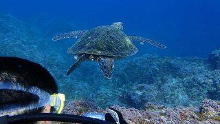 青空広がる八丈島、穏やかな八重根とナズマドで体験ダイビング