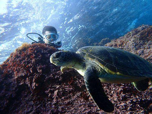 近くでウミガメじっくり見たり