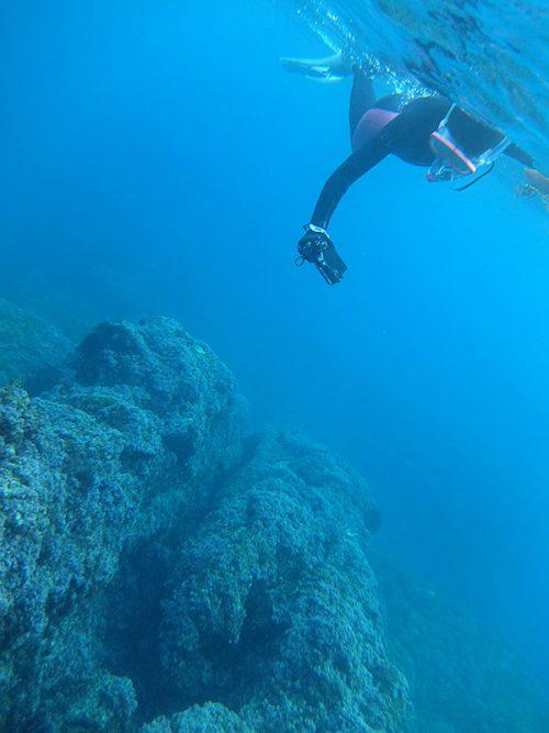 根上の魚とか見ながら泳いで周り