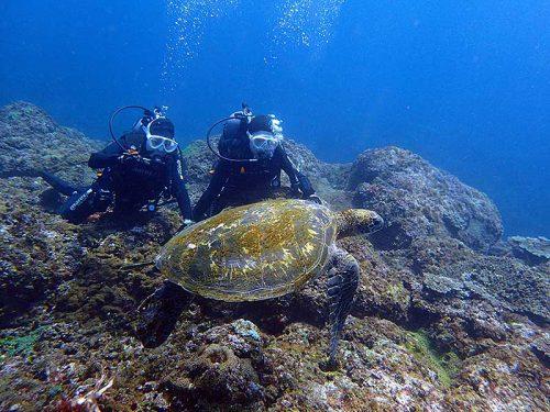 沖ではウミガメを一緒にちょっと泳いでみたりもして