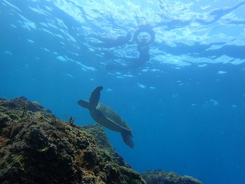 沖を周ればたくさんウミガメ見られたり