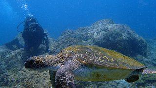 夏っぽい青空広がる八丈島、うねりはあるが八重根で体験ダイビング