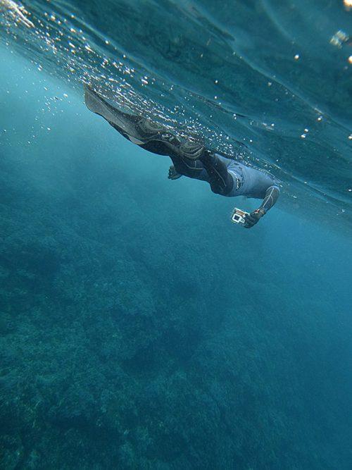 グングン泳いでウミガメ探し