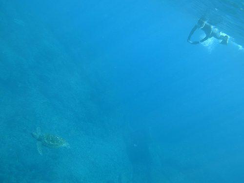 上からウミガメ見たり撮ったりしてみたり