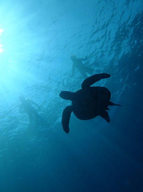 水も綺麗で上からウミガメ見られたり