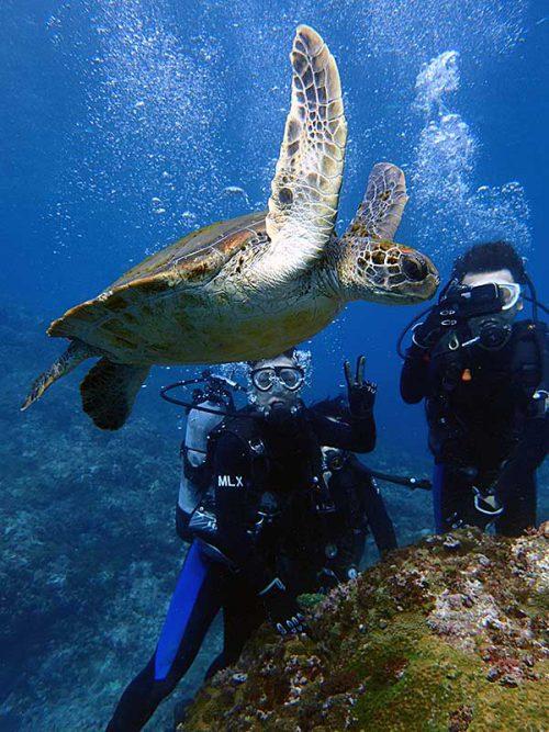 間近でウミガメ見たり撮ったりしてみたり