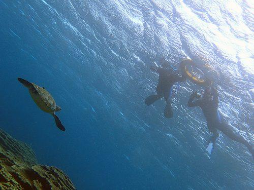 泳ぐウミガメ上から眺め