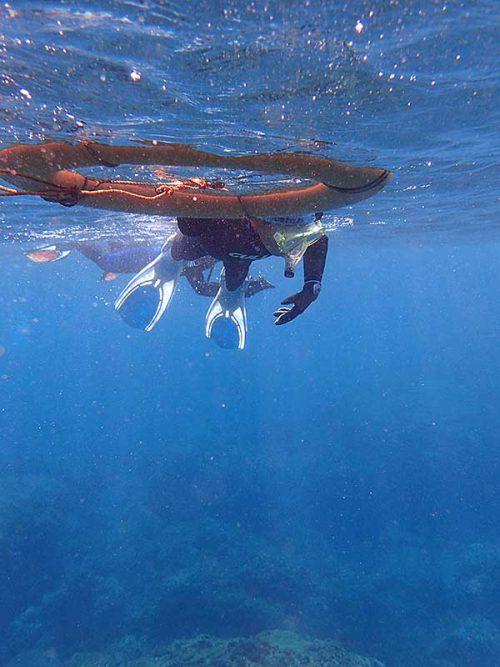 下の方にいる魚とか見ながら泳いで行って