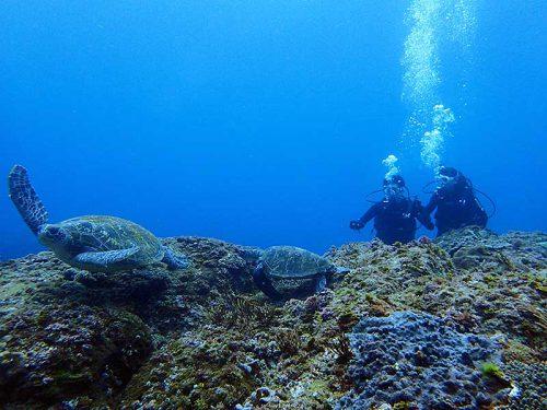 沖まで出れば今日はたくさんウミガメ見れて