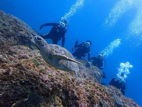 のんびり泳いでたウミガメ見たり
