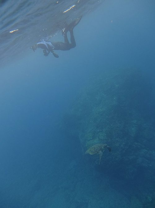 下をウミガメ泳いで通り