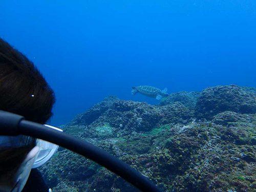 根上に戻ってきてたアオウミガメ