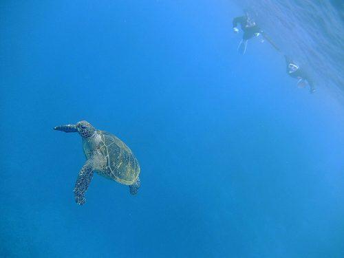 沖出てウミガメ見てみたり