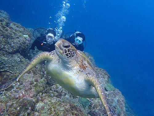 泳ぐウミガメ眺めてみたり