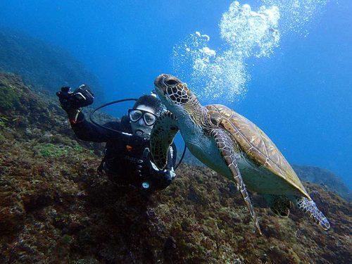 ゆっくり近づき近くでウミガメ見てみたり