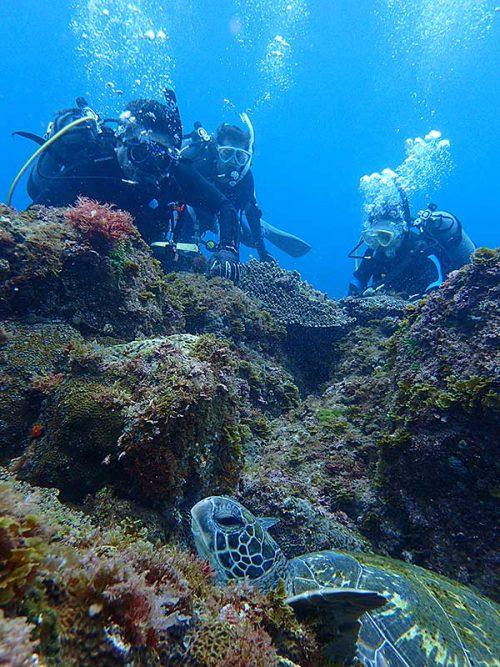 根上の岩の隙間にハマってたアオウミガメ
