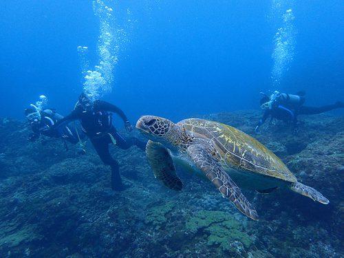 ちょろっとウミガメと一緒に泳ぎ