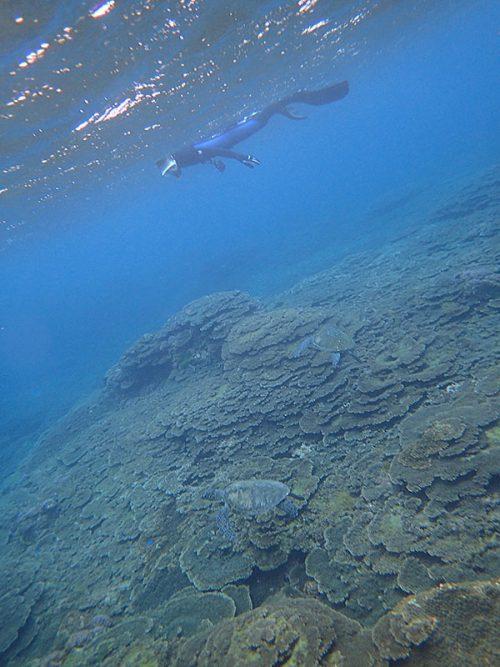 グルッと周れば結構ウミガメたくさん見られ