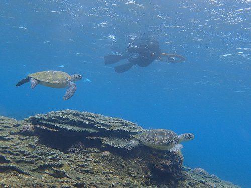 サンゴのところでウミガメのんびり泳いでて