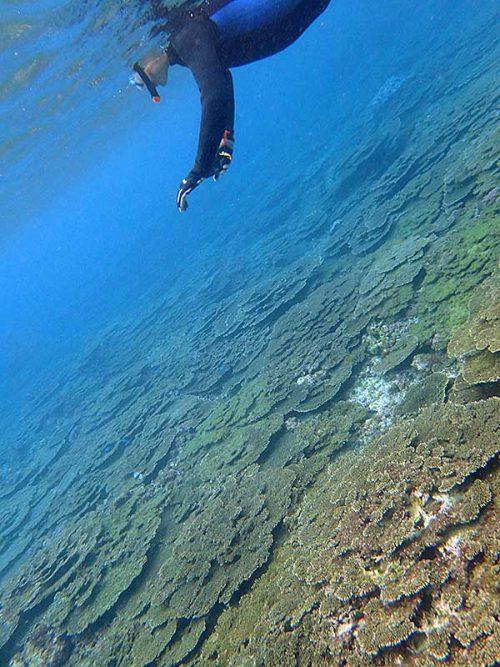 サンゴ広がる底土の海で