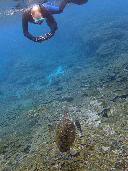 呼吸しに水面近くに上がってきてたアオウミガメ