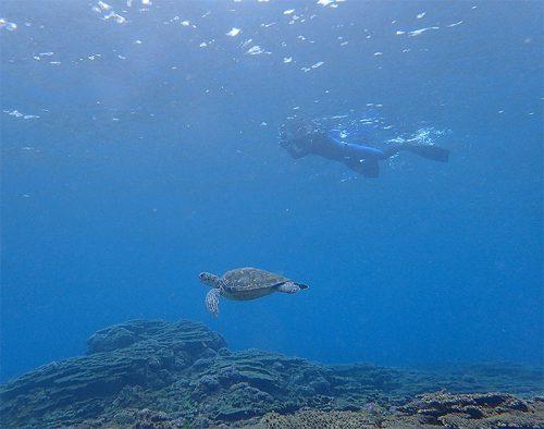 帰りはのんびりウミガメと泳いで戻り