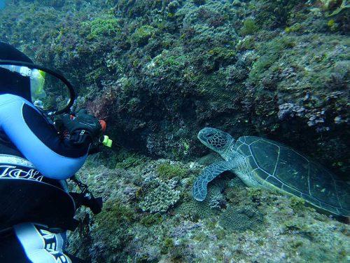 隙間にハマってたウミガメ見たり