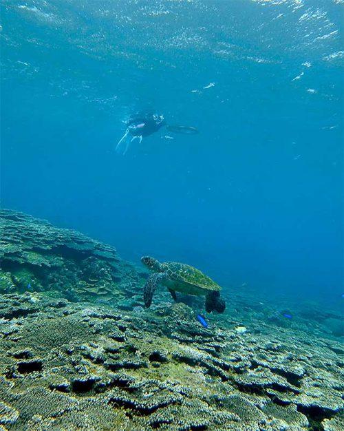 サンゴのところにはウミガメいたり