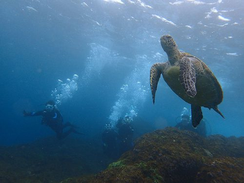 遠目にウミガメ見てみたり