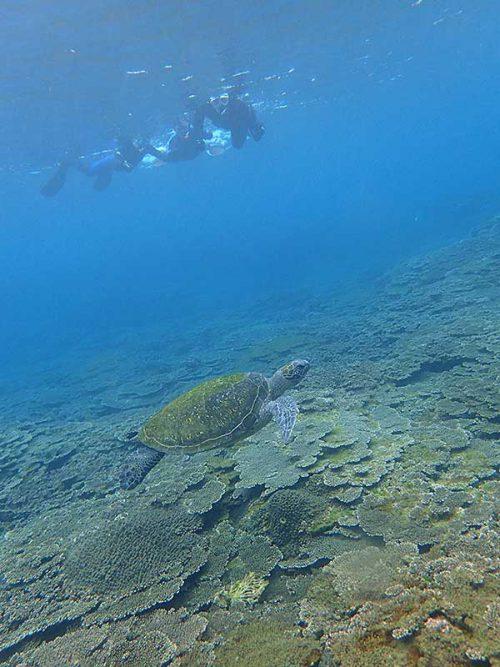 目の前泳ぐウミガメ上から眺めていって