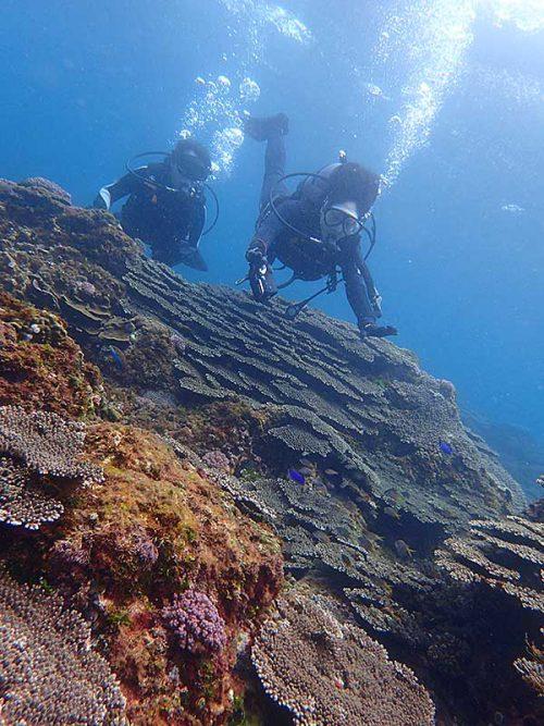 ちょっと沖にはサンゴも一面広がってたり