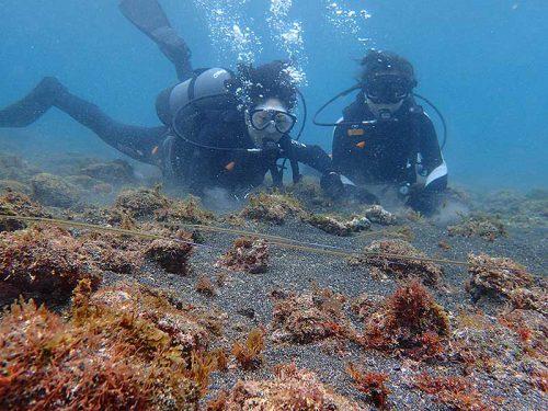 細長いアオヤガラの子ども達とか見つつ海に慣れ