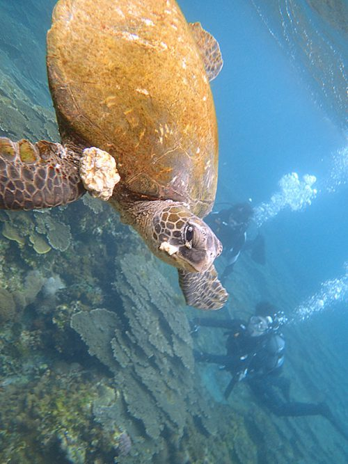 水面近くを泳いでたアオウミガメとか見上げてみたり