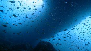久々の青空広がる八丈島、うねりはあるが八重根と底土で【ダイビング】
