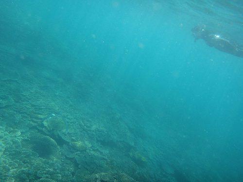 上から近づきのんびりウミガメ眺めてみたり