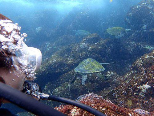 浅場に集まるウミガメ達