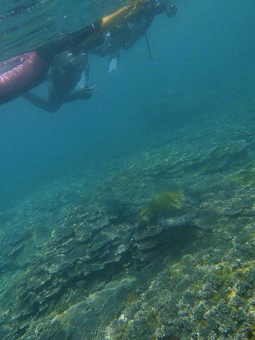 ゆっくり近づき上からウミガメ眺めてみたり