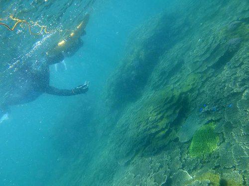 サンゴの上にはソラスズメダイとか色々いたり