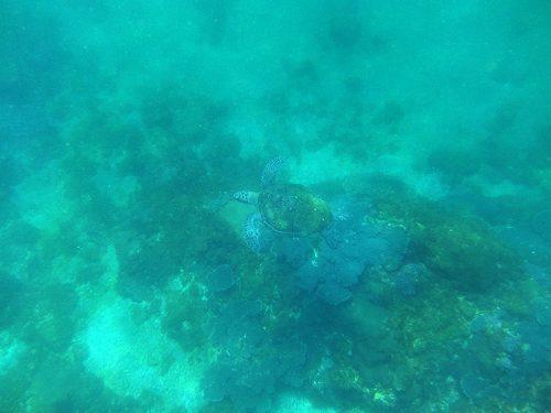 泳ぐウミガメなんかとか見つけ