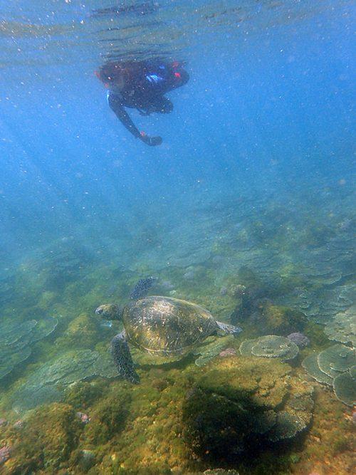ゆっくり近づきウミガメ近くで見てみたり