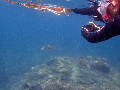上からウミガメ撮ったりしたり
