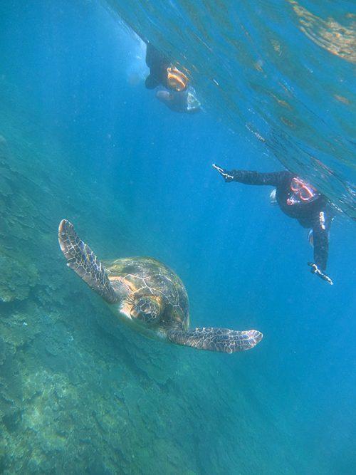 ウミガメと一緒にのんびりシュノーケリング
