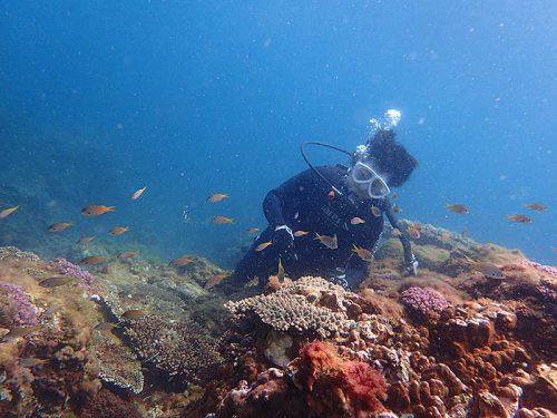 魚を見つつゆっくり潜っていきまして