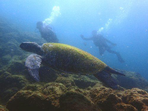 大きなウミガメと一緒に泳いでみたり
